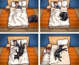dog, funny, and bed image