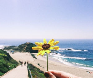 beach, flowers, and summer image