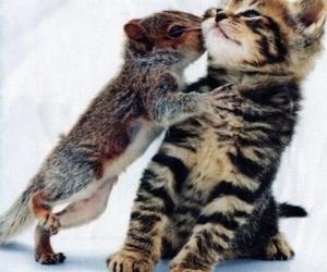 cat, cute, and squirrel image