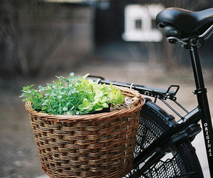 bike, photography, and basket image