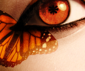 autumn, butterfly, and eye image