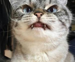 cat, kat, and meow image