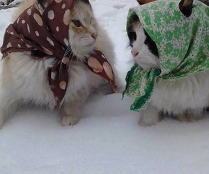 cat, snow, and funny image
