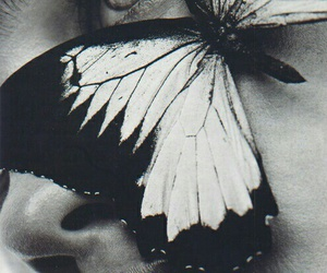 butterfly, black and white, and fashion image