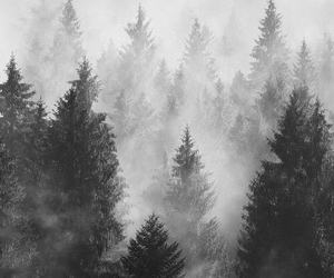 black&white, fog, and landscape image