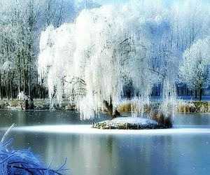 winter and tree image