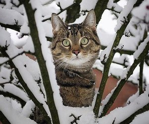 winter, snow, and cat image