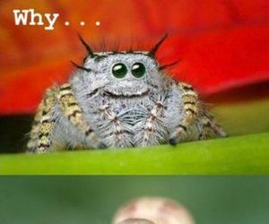 funny, derp, and spider image