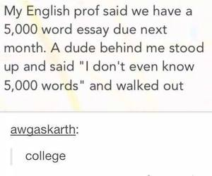 college, essay, and funny image