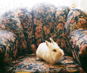 rabbit, vintage, and animal image