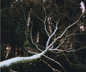 tree and snow image