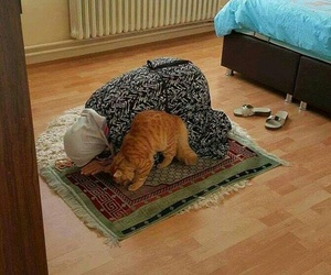 cat, islam, and muslim image
