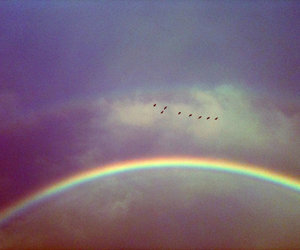 rainbow, bird, and sky image