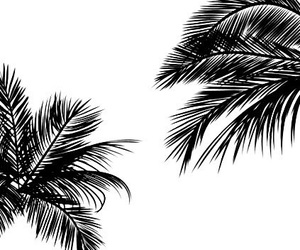 b&w, summer, and palms image