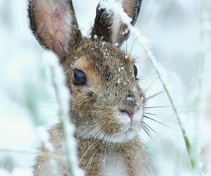 rabbit, snow, and animal image