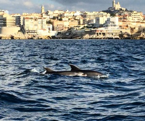 dolphins, france, and marseille image