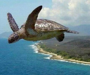 fly, sea, and turtle image
