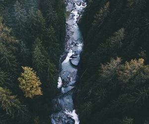 forest, river, and trees image