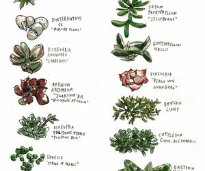 drawing, illustration, and plants image