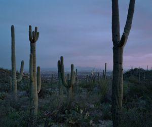 cactus, desert, and nature image