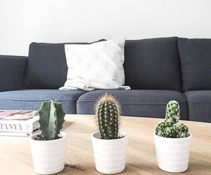 cactus, green, and hippie image
