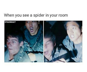 funny, spider, and maze runner image