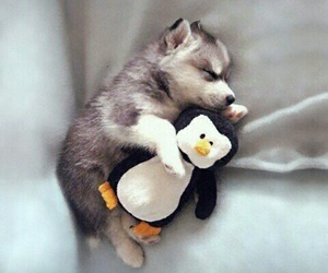cutie and dog with penguin image