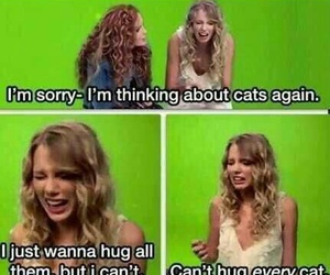 cat, Taylor Swift, and funny image