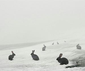 rabbit, black, and bunny image