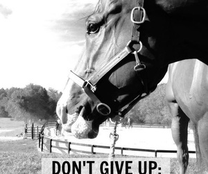 horse and quotes image