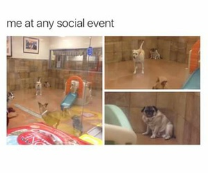 funny, dog, and true image