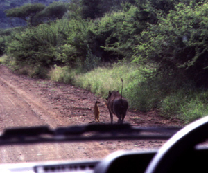 lion king, pumba, and timone image