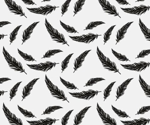 background, wallpaper, and feather image