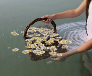 flowers, lake, and water image