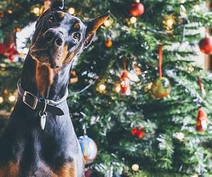 christmas, doberman, and dog image