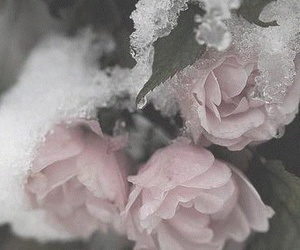 rosa and hielo image