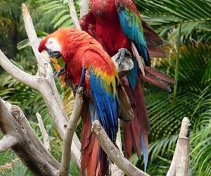 birds, colourful, and parrots image