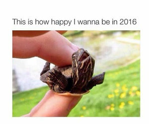 turtle, life, and animal image