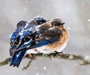 winter, bird, and cold image