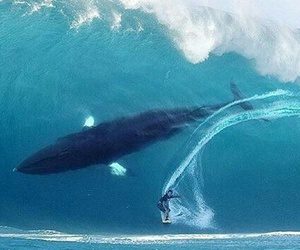 ocean, whale, and surf image