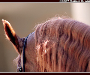 cold, november, and thoroughbred image