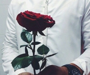 rose, flowers, and men image