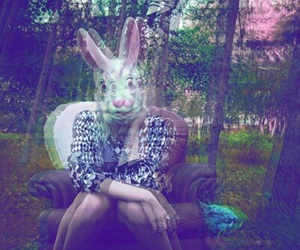 lsd, rabbit, and trip image