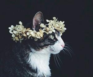 Image by Cristina