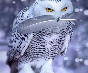 owl, animal, and snow image