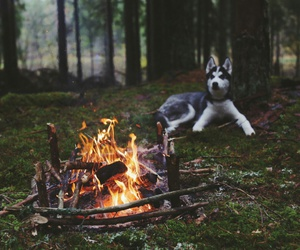 animals, dog, and fire image