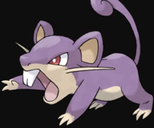 normal, pokemon, and rattata image