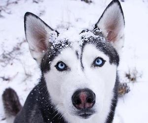 dog, eyes, and snow image