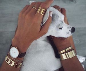 dog, puppy, and gold image
