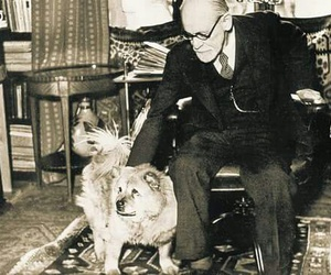 dogs, freud, and psychology image